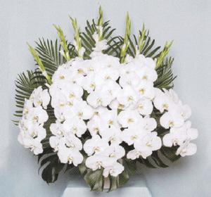 ファレノ生花