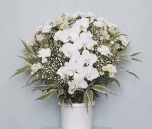 洋風生花 ホワイト